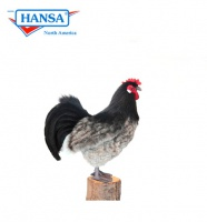 Hen Black and Grey (6037)