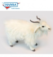 Turkish Long Haired White Goat (6486)