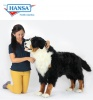Bernese Mountain Dog Adult (Sennhund) (6849)