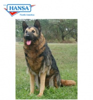 German Shepherd Sitting 24 inches (9502) - FREE SHIPPING!