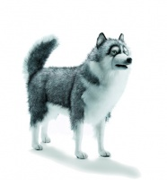 Hansatronics Mechanical Husky Life Size Gray (0061) - FREE SHIPPING!