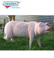 Life Size Pig (4786) - FREE SHIPPING!