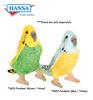 Parakeet (Budgerigar) (4653)